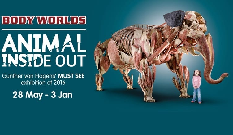 Animals Inside Out At Life I Love Newcastle